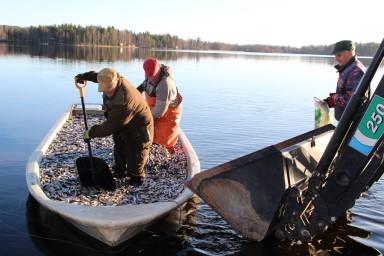 1 hoitokalastus Kyyvesi HMT (Custom)